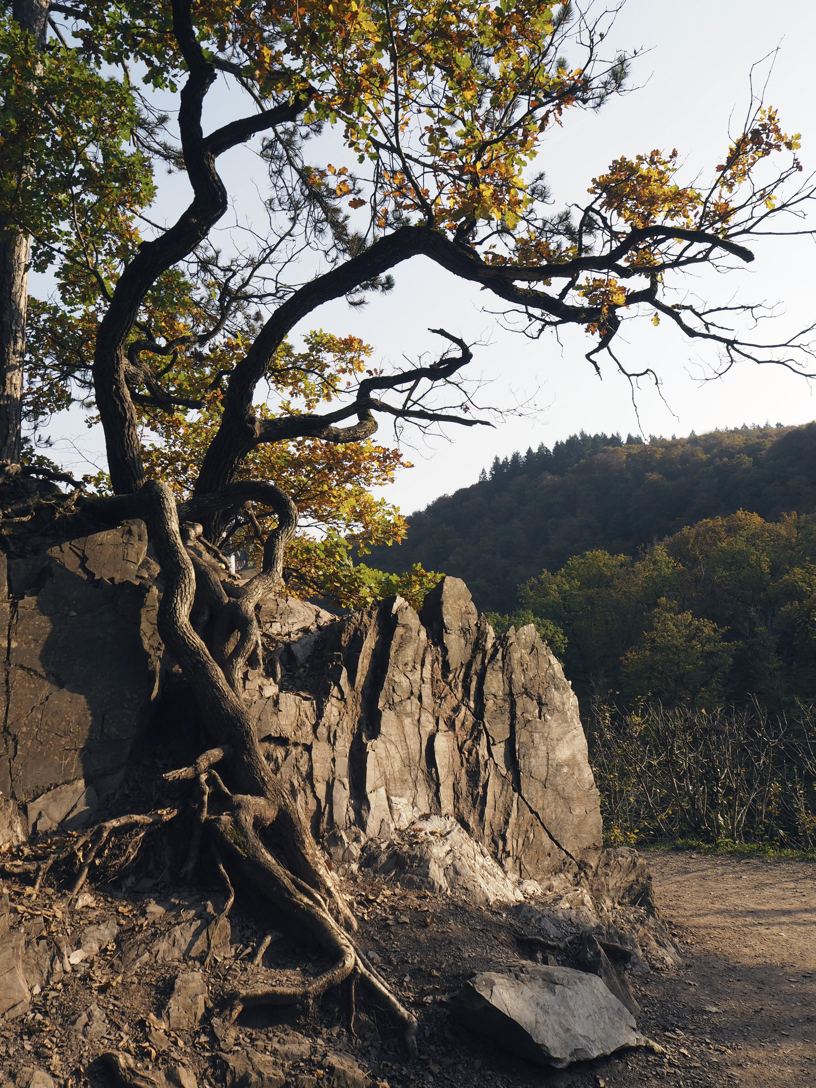 Eltz forest - Taikapuu