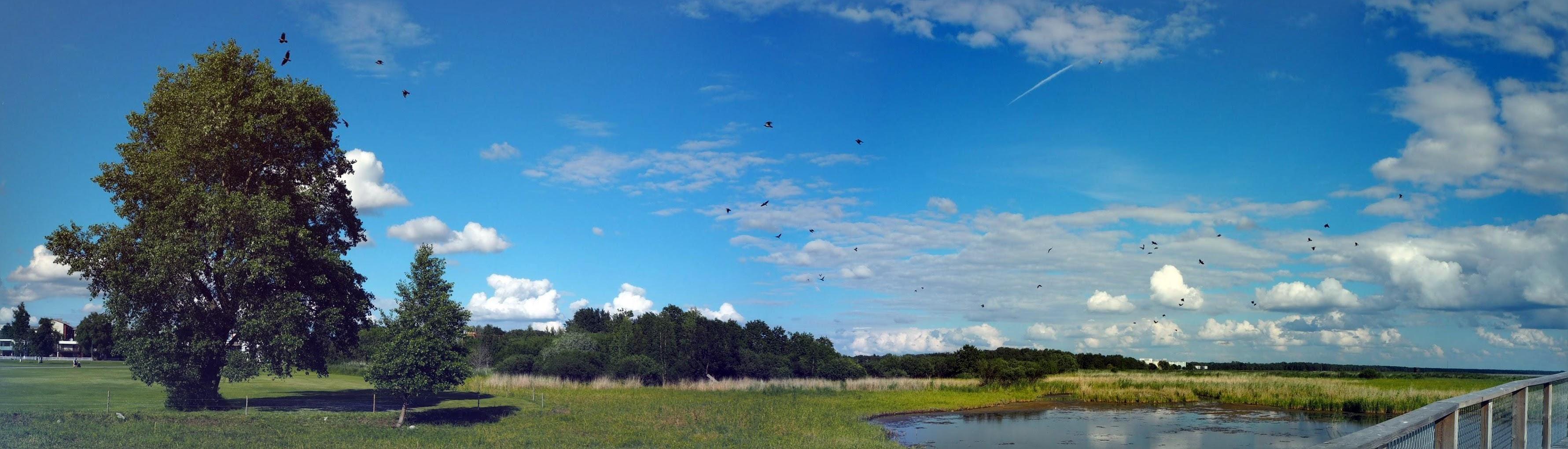 Pärnu ranta rannan luontopolku