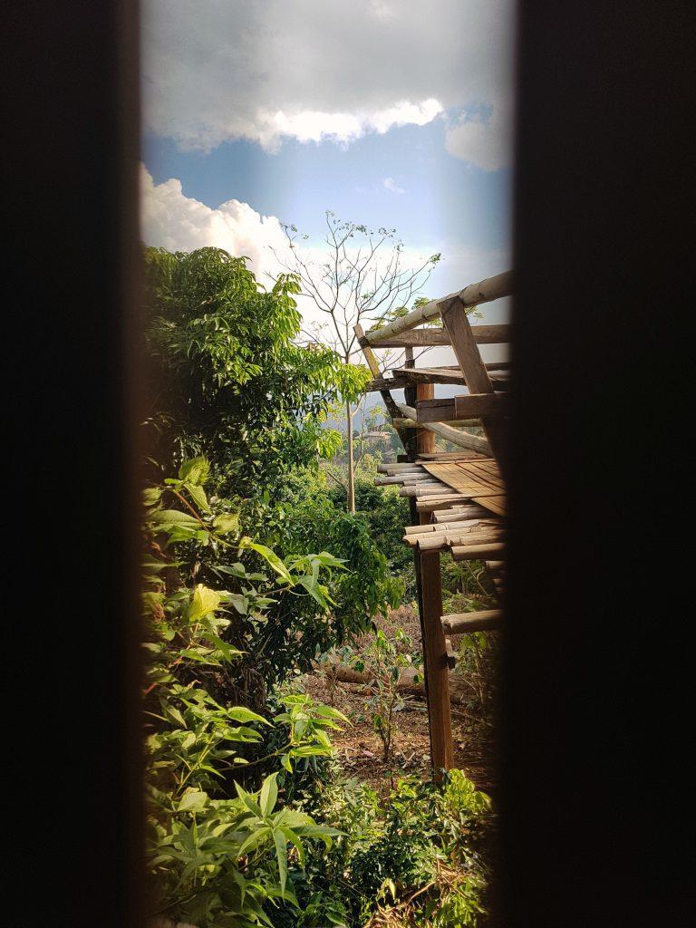 Näkymä bambuseinän raosta